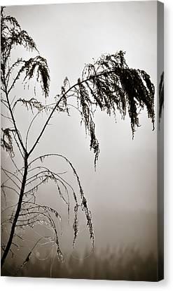 One Foggy Morning Canvas Print by Carolyn Marshall