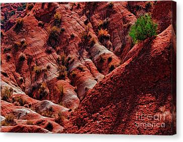 One Green Bush In Pahreah Ghost Town Canvas Print by Blake Richards
