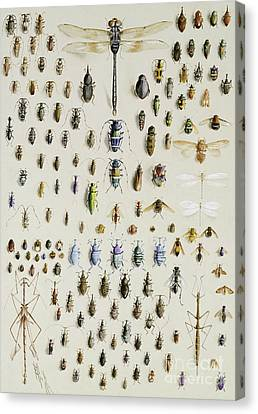 Creepy Canvas Print - One Hundred And Fifty Insects, Dominated At The Top By A Large Dragonfly by Marian Ellis Rowan