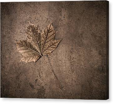 One Leaf December 1st  Canvas Print
