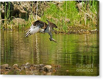 Canvas Print featuring the photograph One More Fish by Alana Ranney