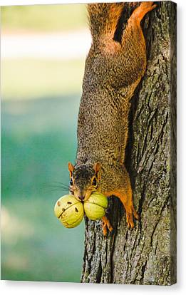 One Nut Is Never Enough Canvas Print by Joni Eskridge