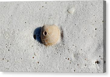 Puerto Rico Canvas Print - One Orange Striped Sea Shell With Hole Macro On Fine Wet Sand by Shawn O'Brien