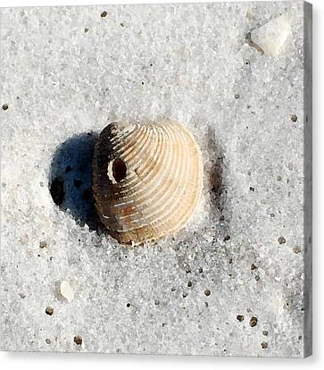 One Orange Striped Sea Shell With Hole Macro On Fine Wet Sand Square Format Watercolor Digital Art Canvas Print by Shawn O'Brien