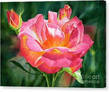 One Red And Gold Rose Blossom Dark Background Canvas Print by Sharon Freeman