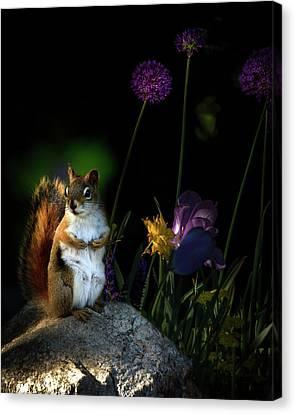 One Red Squirrel  Canvas Print by Bob Orsillo
