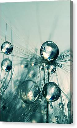 Canvas Print featuring the photograph One Seed With Blue Drops by Sharon Johnstone