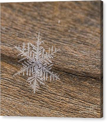 Canvas Print featuring the photograph One Snowflake by Ana V Ramirez