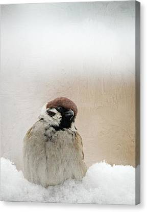 One Sparrow In Snow Canvas Print