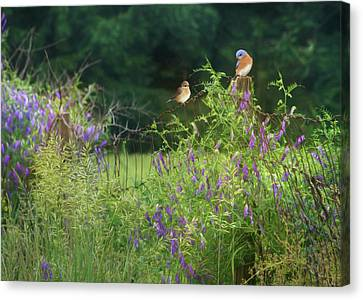 One Summer Afternoon Canvas Print by Lori Deiter