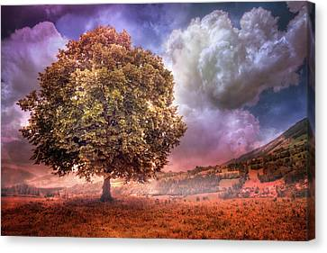 Canvas Print featuring the photograph One Tree In The Meadow by Debra and Dave Vanderlaan