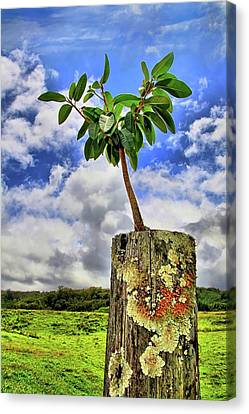 Canvas Print featuring the photograph One Tree One Post by DJ Florek