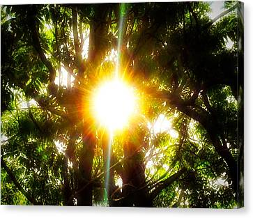 Sun Rays Canvas Print - One Warm Afternoon In The Sun by Debra Lynch