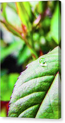 One Waterdrop Canvas Print by Cesar Vieira