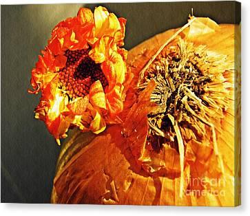 Onion And His Daisy Canvas Print by Sarah Loft