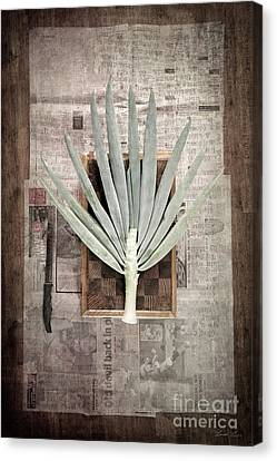 Canvas Print featuring the photograph Onion by Linda Lees