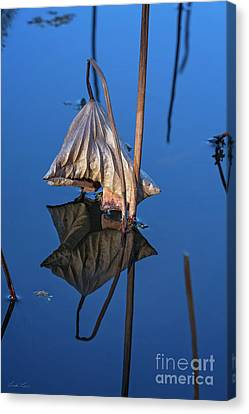 Canvas Print featuring the photograph Only In Still Water by Linda Lees