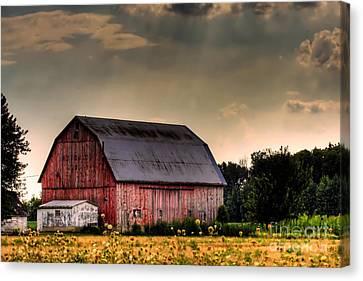 Ontario Barn In The Sun Canvas Print by Tim Wilson