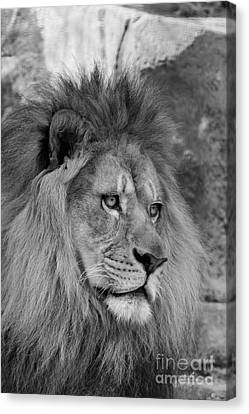 Lion Canvas Print - Onyo #22  Black And White by Judy Whitton