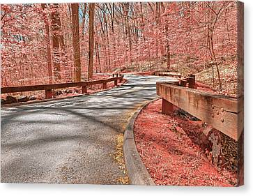 Opalescent Forest Road Canvas Print