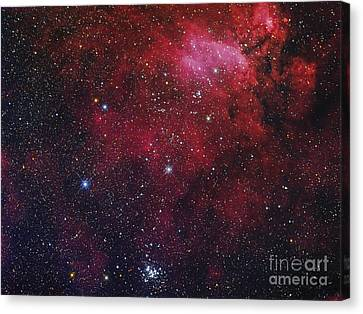 Open Cluster Ngc 6231, The Prawn Nebula Canvas Print by Roberto Colombari
