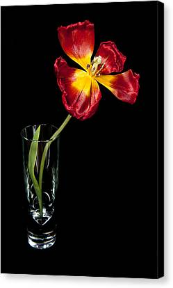 Open Red Tulip In Vase Canvas Print