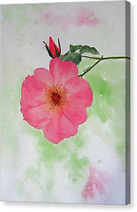 Open Rose Canvas Print