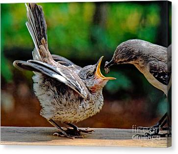Open Wide Canvas Print by Sue Melvin