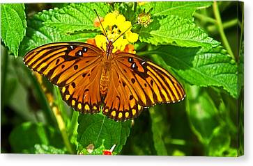 Open Wings Canvas Print
