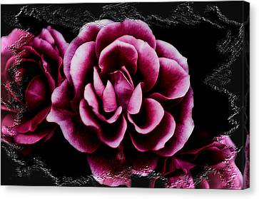 Ophelia's Roses Canvas Print by Shelly Stallings