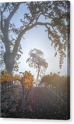 Opolo Vineyard Canvas Print by Joseph Smith