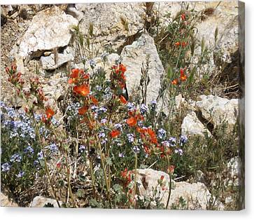 Orange And Blue Flowers Canvas Print by Joan Taylor-Sullivant