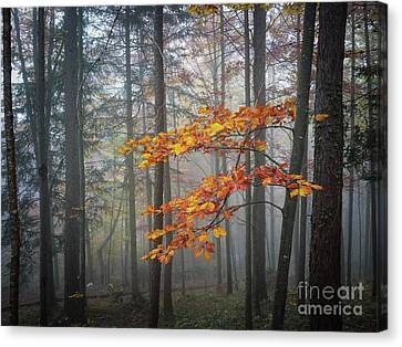 Orange And Grey Canvas Print by Elena Elisseeva