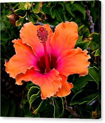 Orange And Pink Hibiscus 2 Canvas Print