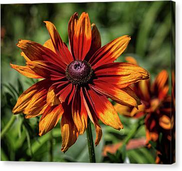 Canvas Print featuring the photograph Orange And Red by Robert Pilkington