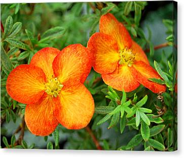 Canvas Print featuring the photograph Orange And Yellow by Marilynne Bull
