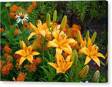 Canvas Print featuring the photograph Orange Asiatic Lilies And Butterfly Weed by Kathryn Meyer