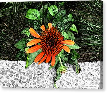 Canvas Print featuring the photograph Orange At Highline Nyc by Joan  Minchak