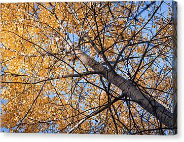 Orange Autumn Tree. Canvas Print