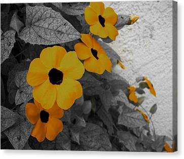Orange Black Eyed Susan Canvas Print by Flower Bomb