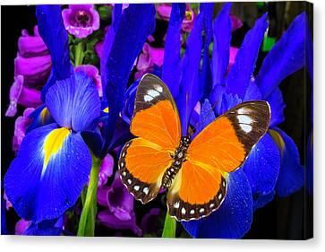 Orange Butterfly On Blue Iris Canvas Print