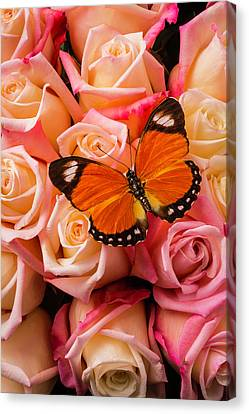 Orange Butterfly On Pink Roses Canvas Print