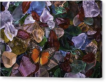 Orange Butterfly On Sea Glass Canvas Print by Garry Gay