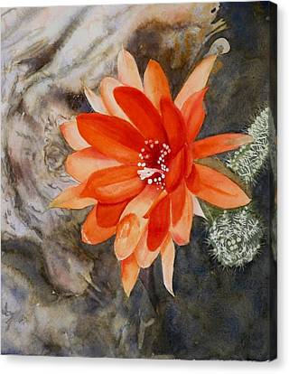 Orange Cactus Flower II Canvas Print
