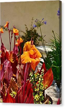 Orange Canna Lilies  Canvas Print