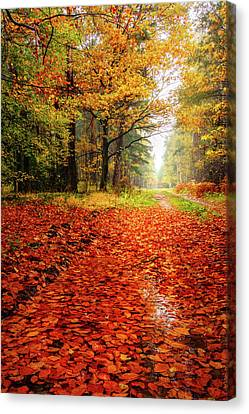 Canvas Print featuring the photograph Orange Carpet by Dmytro Korol