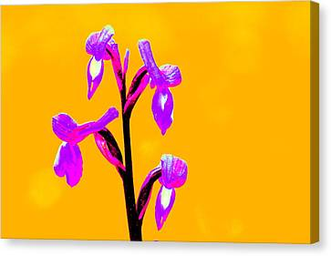 Orange Champagne Orchid Canvas Print by Richard Patmore