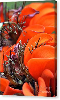 Clayton Canvas Print - Orange by Clayton Bruster