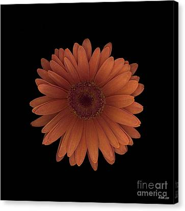 Orange Daisy Front Canvas Print by Heather Kirk