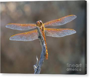 Dragonfly 3 Canvas Print